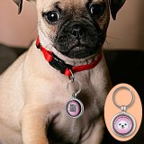 Anti-Loss Dog Pendant - Scan QR Code To Find Owner's Contact Details